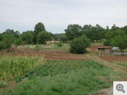 San Marco in Lamis - Zone interne verso Bosco Rosso - Campo coltivato da una giovane famiglia che ci vive.